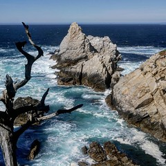 Point Lobos, California #pointlobos #highway1 #california #usa #vacation