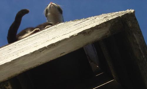 cat tail whiskers cattail katt svans morrhår kattsvans