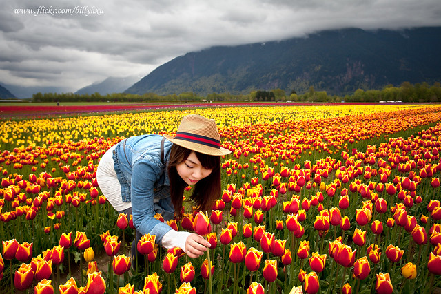 In the Tulip Fields