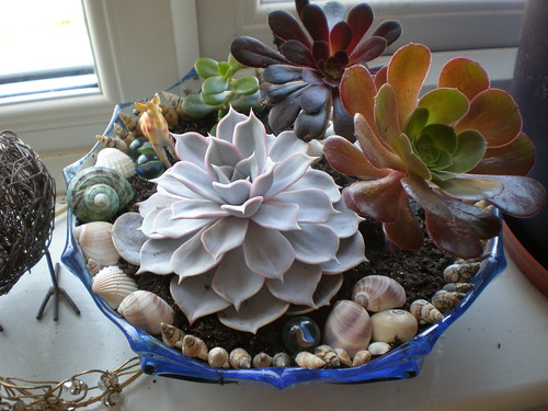 Succulent Garden a Week Later