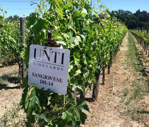 Unti winery
