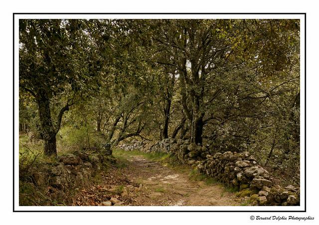 Meyras (Ardèche)