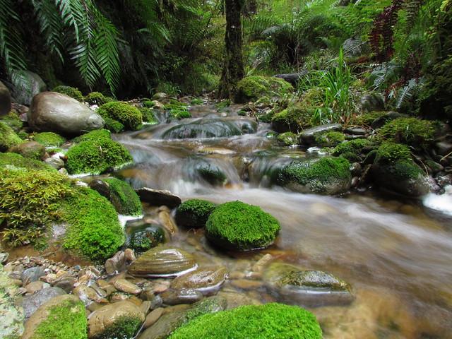 Okuku Creek ~ West Coast NZ