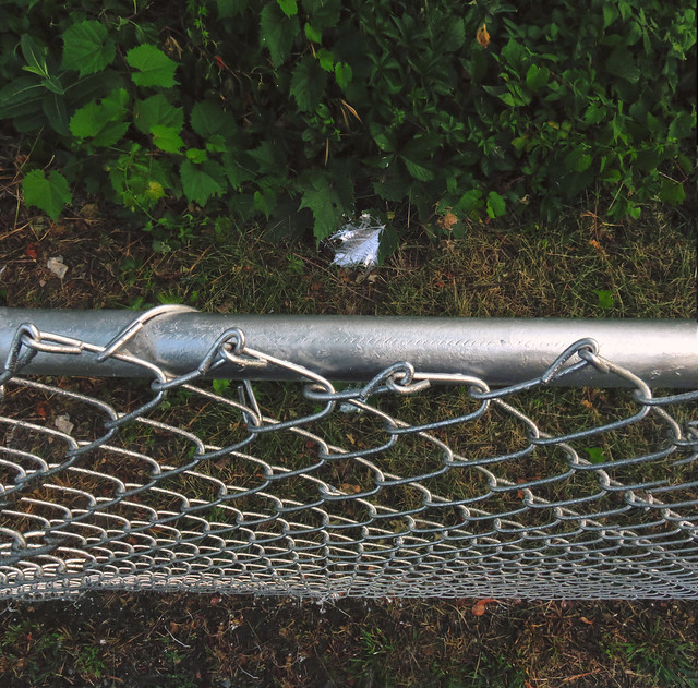 Spray painted chain link fence and painted leaf; Wakefield, MA (2016)