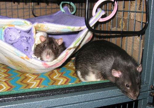Bug and Merlin
