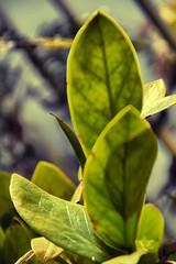 Foliage / folhagem