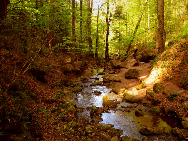 Tiny untouched Creek