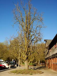 Picnic at Sunnybrook Park
