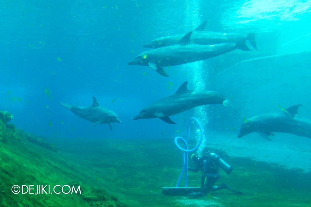 Marine Life Park Singapore - S.E.A. Aquarium - Dolphins 6