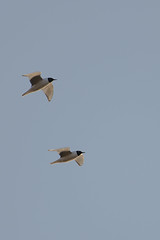 Gulls-40035.jpg by Mully410 * Images