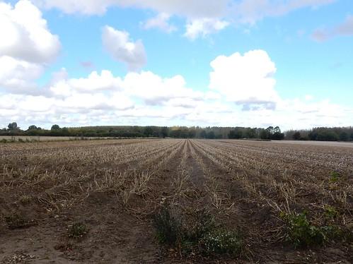 Patterned field