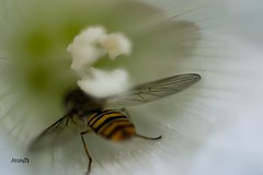 Crawl in , #Insect , #flower , #macro , #Stamen , #mothernature , #delicate , #Wildlife , #beautiful , #splendid , #Upclose , #photoart , #vibrant , #wanderlust , #closeup , #spring , #perspective , #dramatic , #Exposure , #Outdoor, #contrast , #Photograp