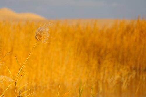 desert egypt flickr sand siwa matrouhgovernorate egitto eg goldenlight
