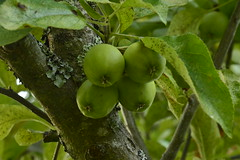 Quatre pommes en 2 fois 2