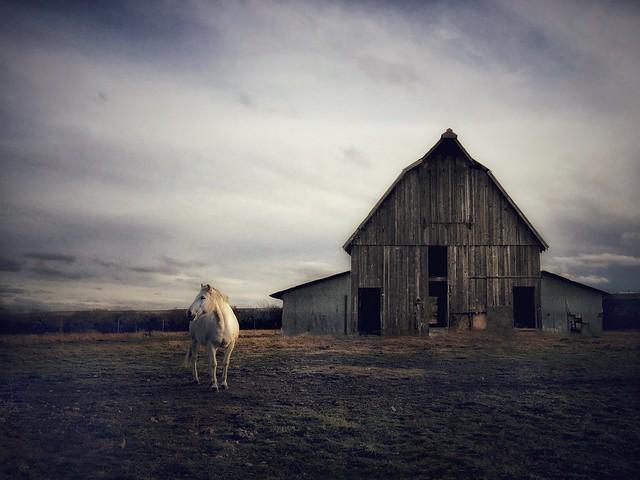 White Horse, Old Barn