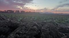 Nuestra tierra #nofilter #santapaula #venturacounty @photosofvc @venturacountygold @visitoxnardca @visitventura #sunset #strawberryfields  #equality #campesino #farmworkers