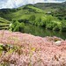 Natural beauty of flowering moss along the Douro Landscape