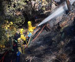 Griffith Park Brush Fire Handled Quickly
