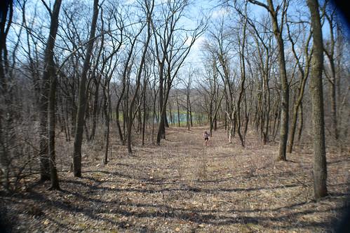 trees forest woods nikon iowa hike adventure