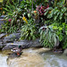 Small photo of Ducks in Adventureland