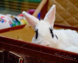 Questo bel coniglio è pronto per partire