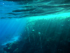 sunshine under the sea