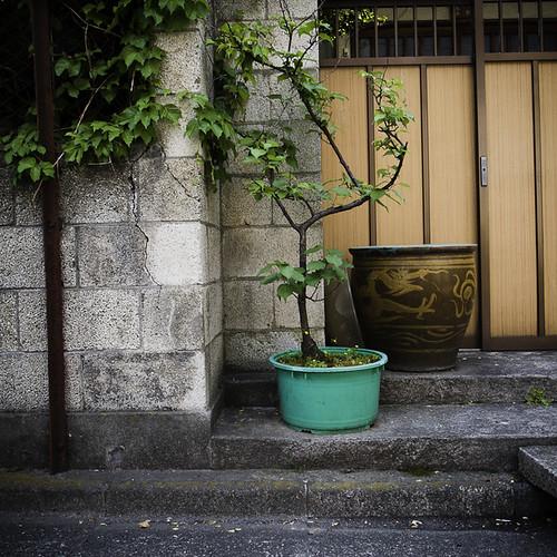 Green Potted Plant with Sliding Door, Monzennakacho