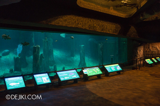 River Safari - Amazon Flooded Forest main display 4