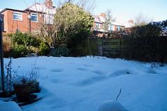 Winter 2013 (Jesmond Dene)  (1)