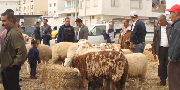 Tunisians Prepare for Traditional Eid al-Adha Celebrations