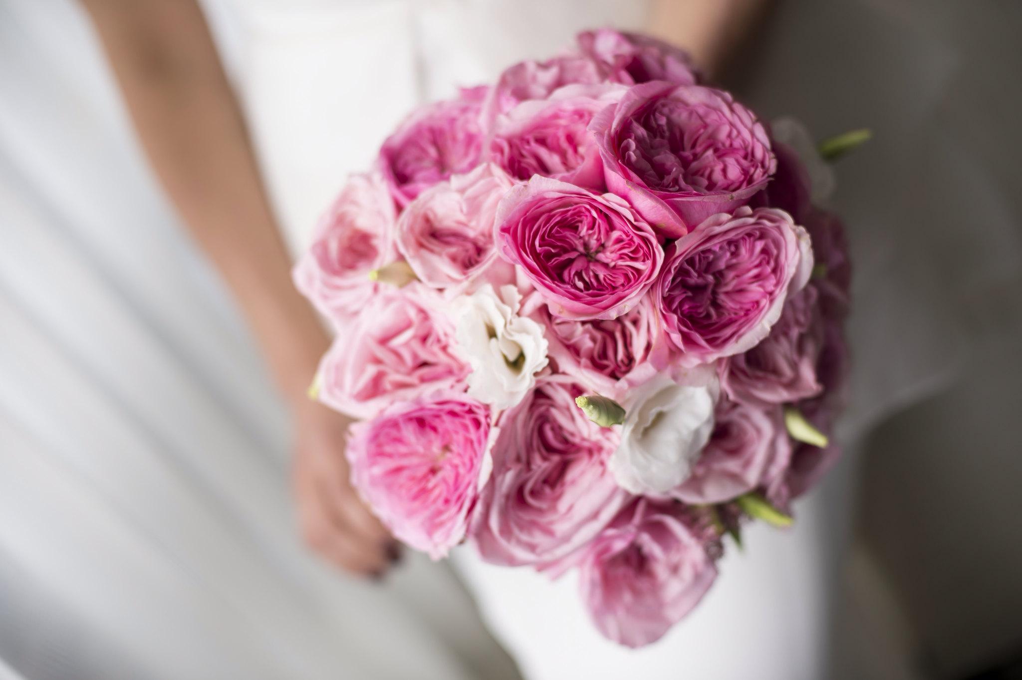$W-bb.14.        $150. Garden rose