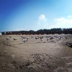 A flock of seagulls.