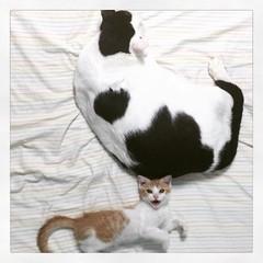 Kitties, big and small.