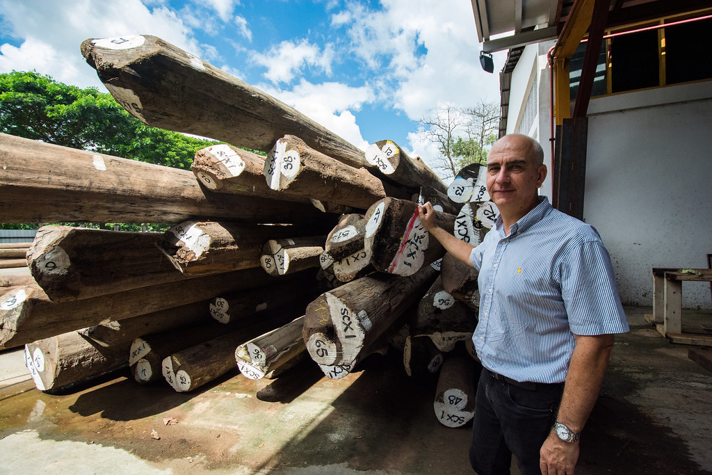 Philippe Maudet, General Manager of Olam Wood Products with teak logs, Yangon, Myanmar
