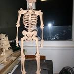skelett4