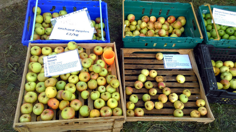 Apple day 2016-14