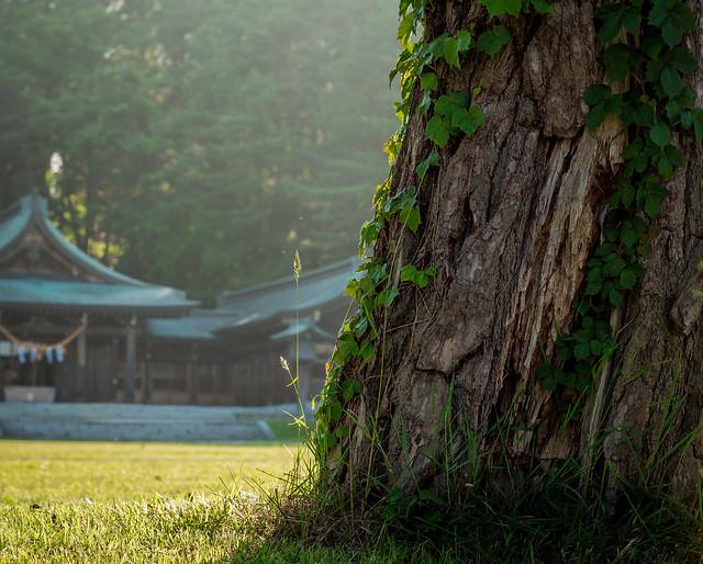 Photo:Gokoku Tree By campra