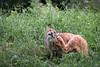 Funny lynx pic