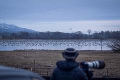 Photographers and migrating geese at Miyajima-numa (Tsukigata Town, Hokkaido, Japan)