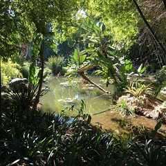 The Lily Pond Garden at  @thehuntingtonlibrary Botanical Gardens