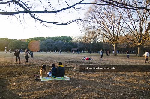 street streetphotography travel japan asia picnic park winter sunset sunrise people city urban daylife tree badminton kites