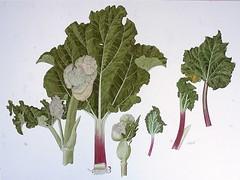 rhubarb: george olson