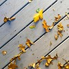 Decorating the deck    #:maple_leaf::fallen_leaf: