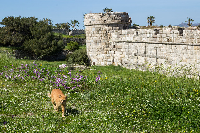 Cat Guarding Kos Fortress