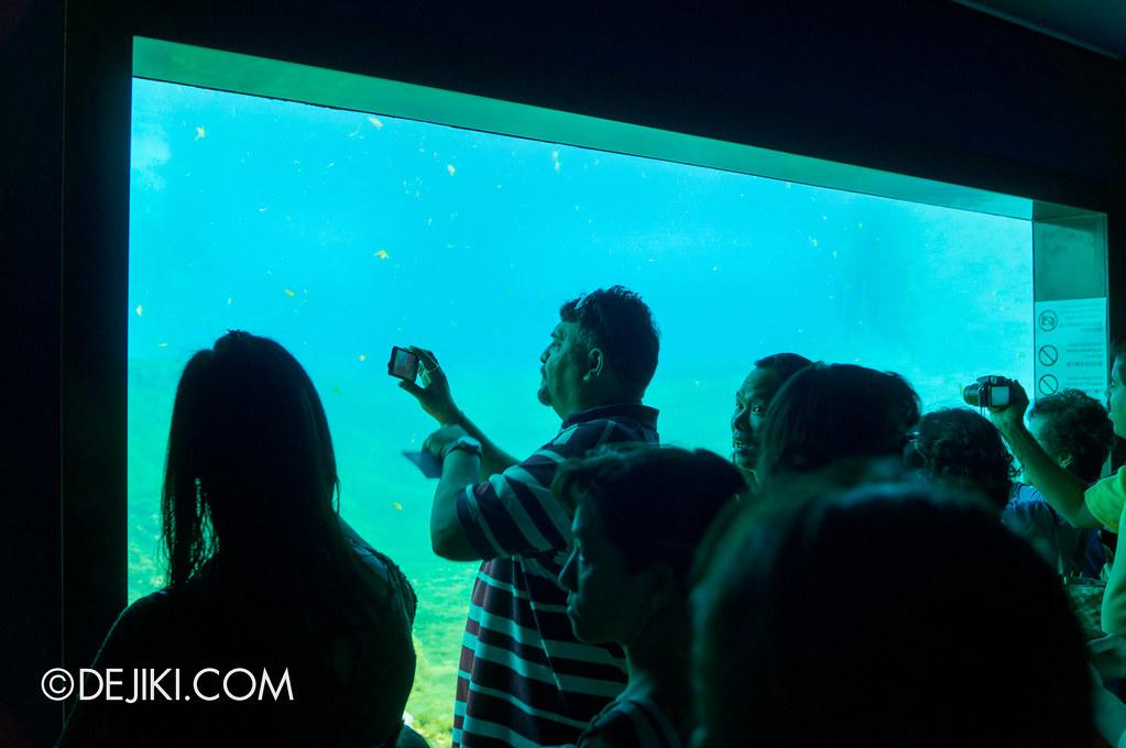 Marine Life Park Singapore - S.E.A. Aquarium - dolphin island gallery 2