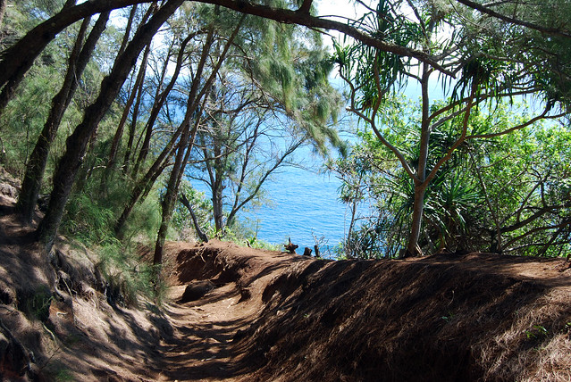 Pololu Trail