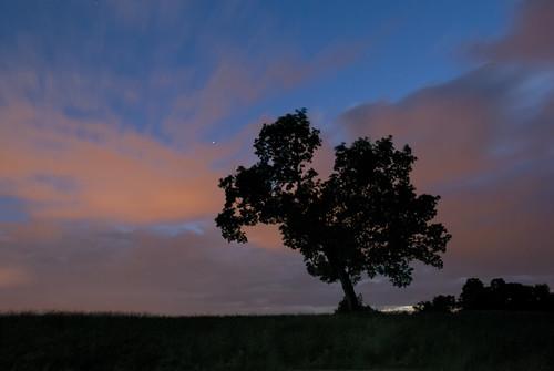 longexposure sky tree primavera nature silhouette night clouds spring alone slovenia lonely slovenija albero arturo solitario carso lipica
