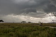 Tanzania-Serengeti-MbuziMaweSafariDrive-24