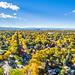 Fall Canopy by RyanDravitz