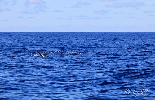 Azores2014_0391